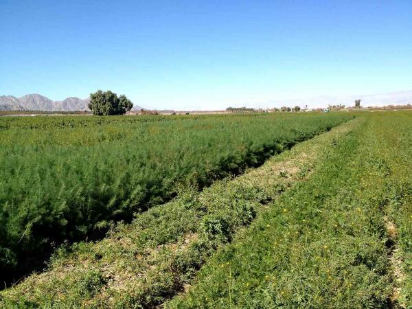 Alleviating Poverty Through Farming