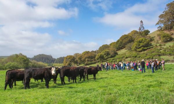 Climate-Smart Ranching: An Interview with Kat Taylor and Wendy Millet