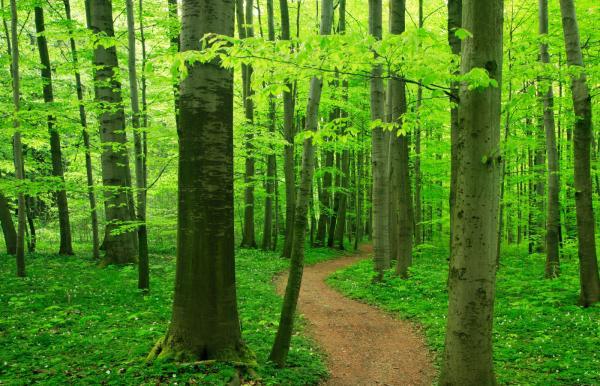 Environmentally Friendly World Illustration Ecology Concept Stock ...
