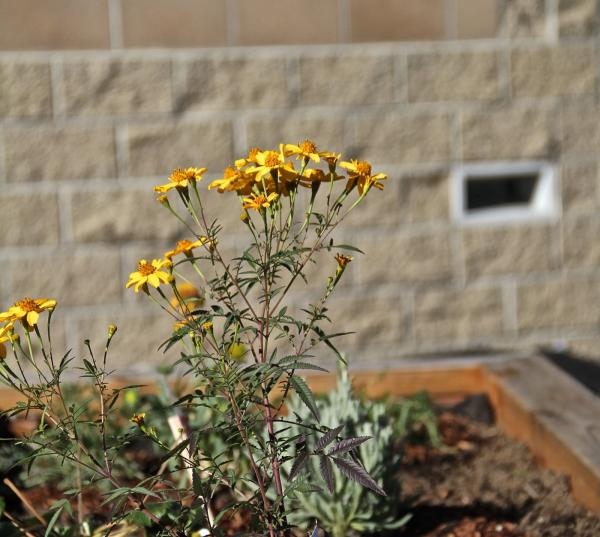 A Garden Grows in Juvenile Hall