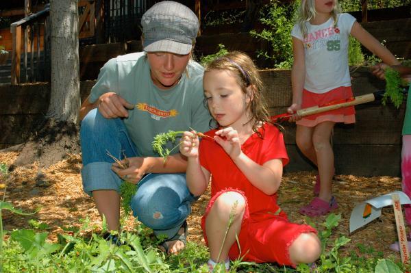 greening a K-12 Curriculum