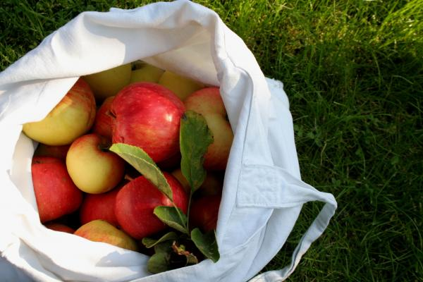 Neither Paper nor Plastic: Eating Outside the Lunch Box