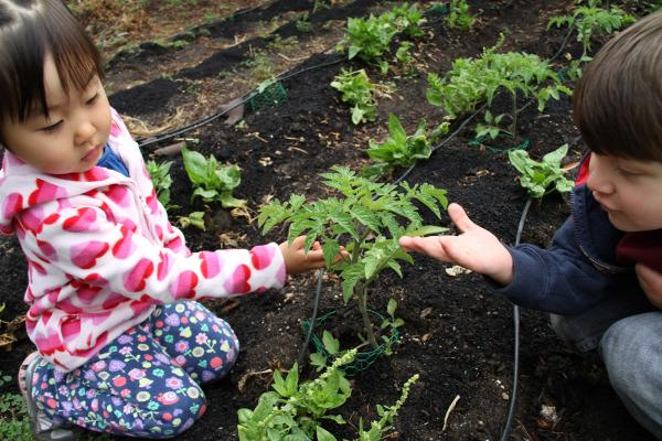 The School Garden Debate: To Weep or Reap?