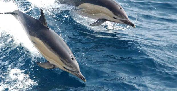 On Dolphins, Young People, And Unintended Consequences: A Conversation With Biol
