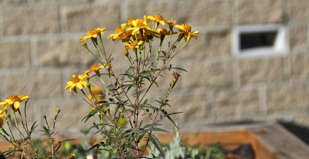 A Garden Grows in Juvenile Hall