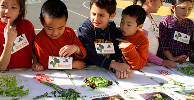 Produce Lesson for Students on Broccoli Team