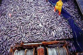 People Overfishing
